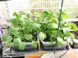 greenhouse gardening john u0027s garden journal