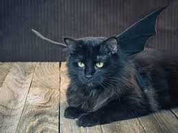halloween pet costume black bat hgtv