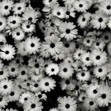 35 hd black white backgrounds
