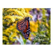 birthday monarch butterfly postcard birthday gifts