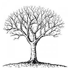 bare tree photo shurwood43 fans images