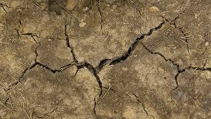 Drought Tolerant Landscaping Ideas Drought Tolerant Landscaping Ideas