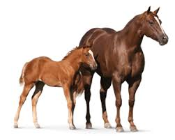 horse feed u0026 supplements l purina