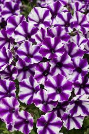 741 best beautiful blooming flowers images on pinterest blooming