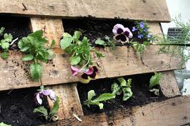 Wall Mounted Herb Garden by How To Make A Pallet Garden Modern Farmer