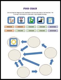 food chain click and drag concept map worksheet by natalie kozak phd