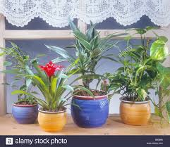 different indoor plants on window sill stock photo royalty free