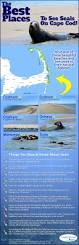best places to see seals on cape cod