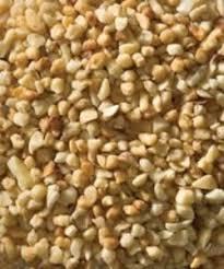 sunflower seed esbenshade u0027s garden centers