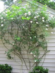 cottage and vine diy trellis