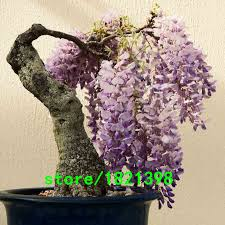 high quality indoor trees sale buy cheap indoor trees sale lots