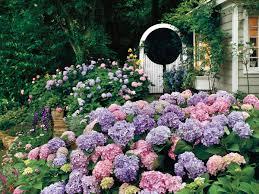 Plants That Don T Need Light Go Ahead Plant Those Gardenias Southern Living
