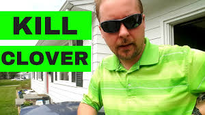 how to get rid of clover in your lawn youtube