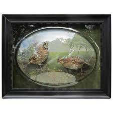 martini table with bird framed diorama with birds dioramas taxidermy and bird