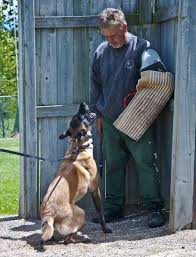 belgian sheepdog rescue ontario malinger kennels