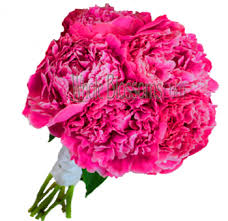Peonies Flower Peonies Wedding Flowers Buy Wholesale Peonies In Bulk Pink