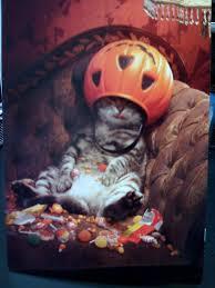 pink berry sprinkles not so spooky halloween cat u0026 giveaway