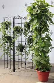 indoor ivy plants houseplants to care for indoor plants best your