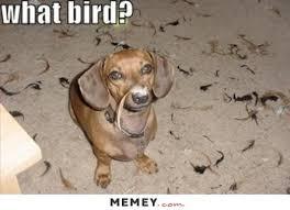 Weiner Dog Meme - best of the very best dachshund memes dachshund funnies wallpaper