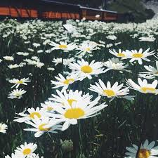 Colorado travel log images 184 best durango wildflowers images wildflowers jpg