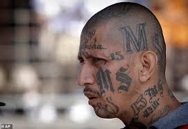street gang ms 13 grips long island suburbs in violence daily