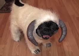 Yeti Halloween Costume Yeti Star Wars Aminals Pug Dog Funnies