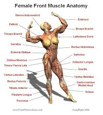 Human Anatomy Muscle 81 Best Detail Muscles Images On Pinterest Health Human Anatomy