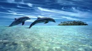 Image Zen Gratuite by Dolphin Dreams Melody Oceans Zen And Relaxation Youtube