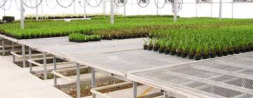 Metal Greenhouse Benches How Selecting The Right Bench For Your Crop Can Make All The