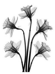 best 25 daffodil tattoo ideas on pinterest narcissus tattoo