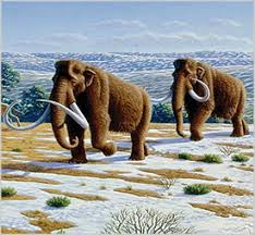 extinction genomic engineering mammoth proportions