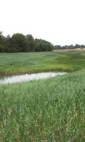 in bureau growing wetlands for clean water the wetlands initiative