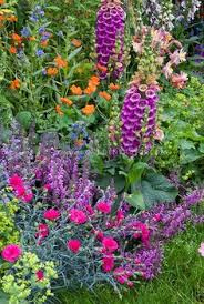 Summer Garden Plants - mixed late spring early summer garden of nepeta catmint tall