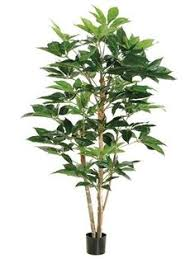 4 mango tree in metal container be sure to check out this