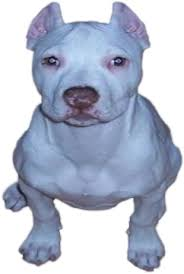 american pit bull terrier breed standard american pit bull registry pit bull breed standard