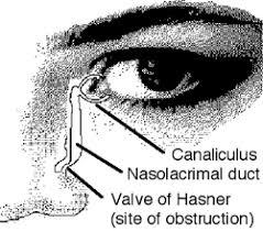 Eye Ducts Anatomy Nld