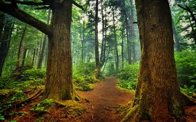 splendid forest wall mural amazon hd wallpaper background id awesome enchanted forest wallpaper iphone la push forest wallpaper forest wallpapers hd 1366x768 full size
