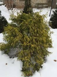 The Summer And Winter Garden - winter garden exhibitionists the hortiholic