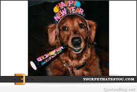 new year s setters happy new year photos with animals 2016