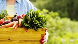 8 home gardening tips u0026 ideas to grow more u0026 reduce waste