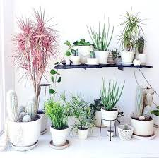 Floor Plants Home Decor | plants for home decor floor plants home decor thomasnucci