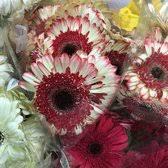 wholesale flowers san diego wholesale flowers 212 photos 268 reviews florists 5305