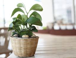 Fake Plants For Home Decor 7 Decor Decisions That Make Your Home Look Like A Mess Huffpost