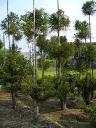 index of kwolf misc mistreated trees