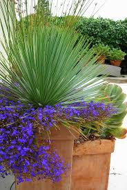191 best containers images on pinterest garden landscaping and