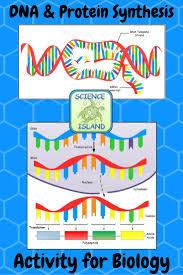 best 25 translation biology ideas on pinterest transcription