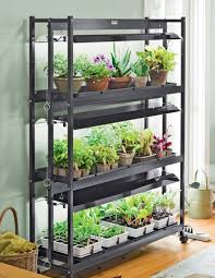 grow an indoor vegetable garden and enjoy your own fresh organic
