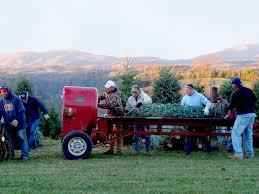 acta sparta north carolina christmas tree facts