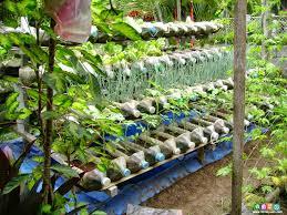 best vegetable garden layout brilliant design container vegetable garden plans geeky gardening