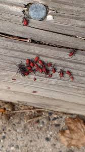 how to get rid of backyard bugs part 26 3 ways to get rid of